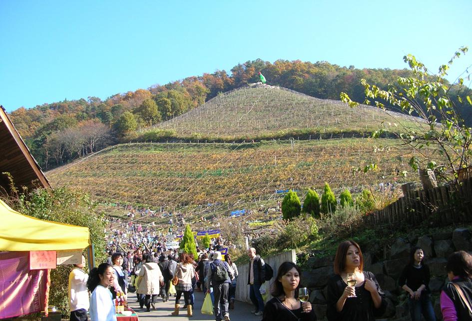 ココ ファーム 2010収穫祭 足利_e0127948_140195.jpg