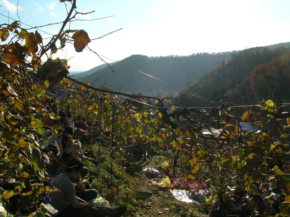 ココ ファーム 2010収穫祭 足利_e0127948_140452.jpg