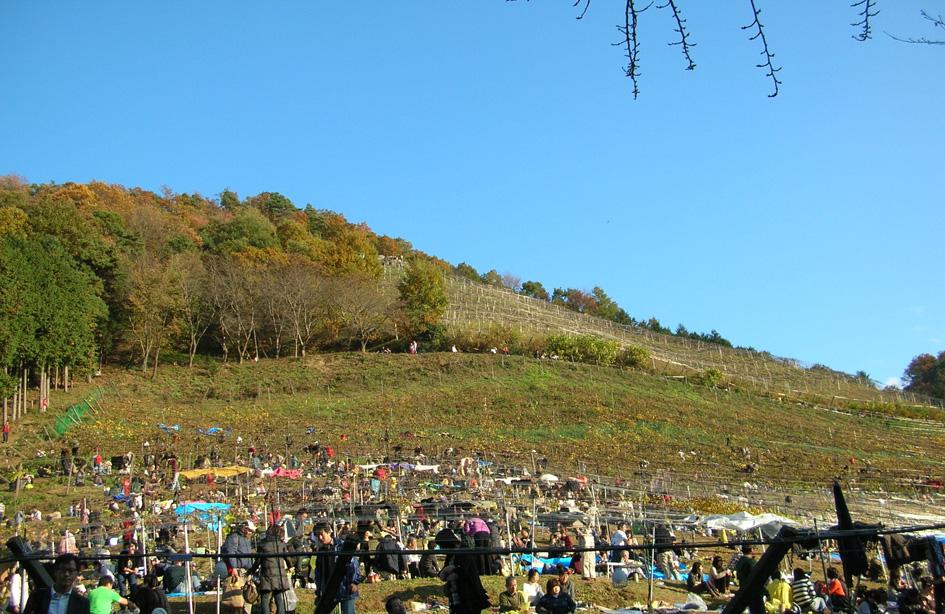 ココ ファーム 2010収穫祭 足利_e0127948_1405495.jpg