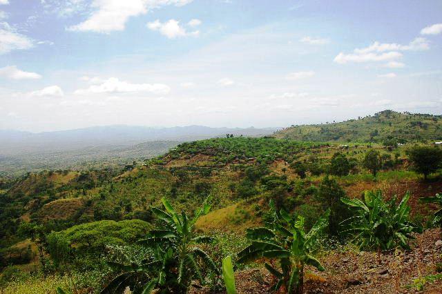 エチオピア(27) コンソでコーヒー休憩_c0011649_8552951.jpg