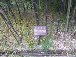 竹の勉強会_c0087349_5435597.jpg