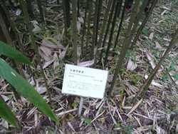 竹の勉強会_c0087349_5441345.jpg