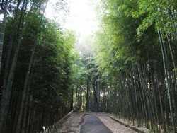 竹の勉強会_c0087349_5443540.jpg