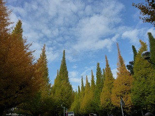 late in autumn      いちょう祭り♪_a0165160_71416.jpg