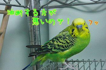 f0196665_011879.jpg