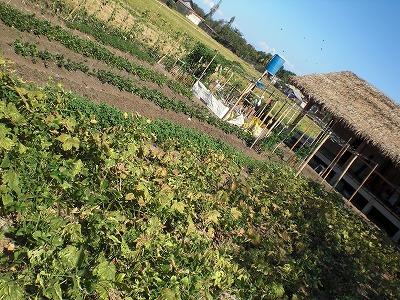 学校給食とオーガニック菜園を通じた食育プロジェクト_f0210568_1628642.jpg
