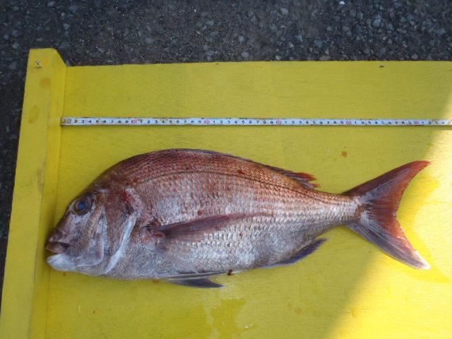 いまりマリーナ秋季釣り大会結果_a0077071_17522747.jpg