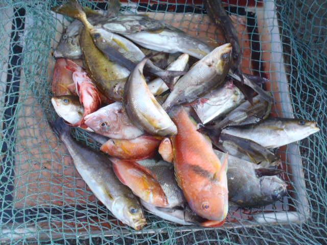 いまりマリーナ秋季釣り大会結果_a0077071_1812493.jpg
