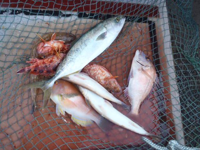 いまりマリーナ秋季釣り大会結果_a0077071_18331084.jpg