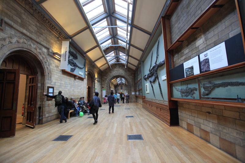 ロンドン自然史博物館_c0187779_0272619.jpg