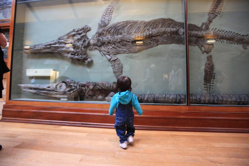 ロンドン自然史博物館_c0187779_0281444.jpg