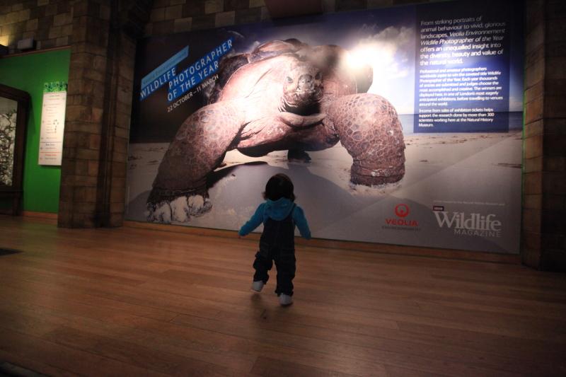 ロンドン自然史博物館_c0187779_4142820.jpg