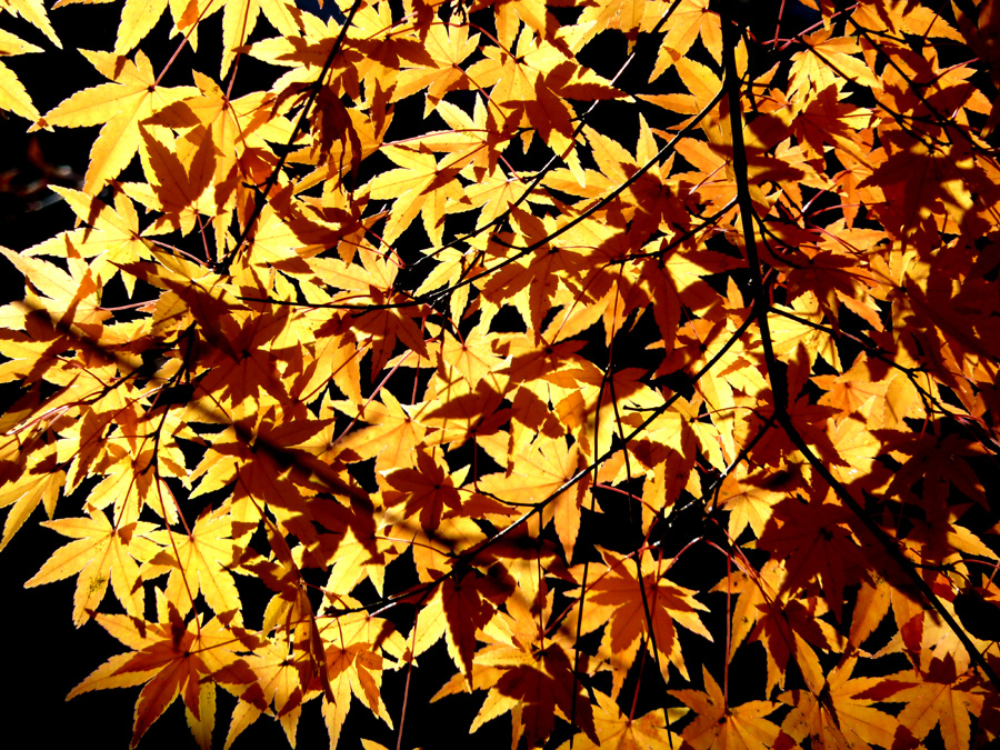 黄葉&紅葉_f0150893_1941856.jpg