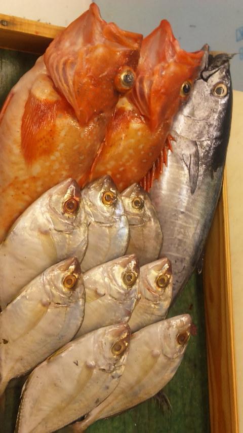 今日の魚_e0183396_0582127.jpg