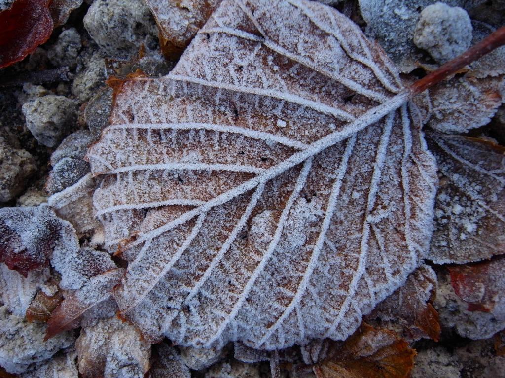11月21日、樽前山、風不死岳と紋別岳-写真をメインに-_f0138096_9554479.jpg
