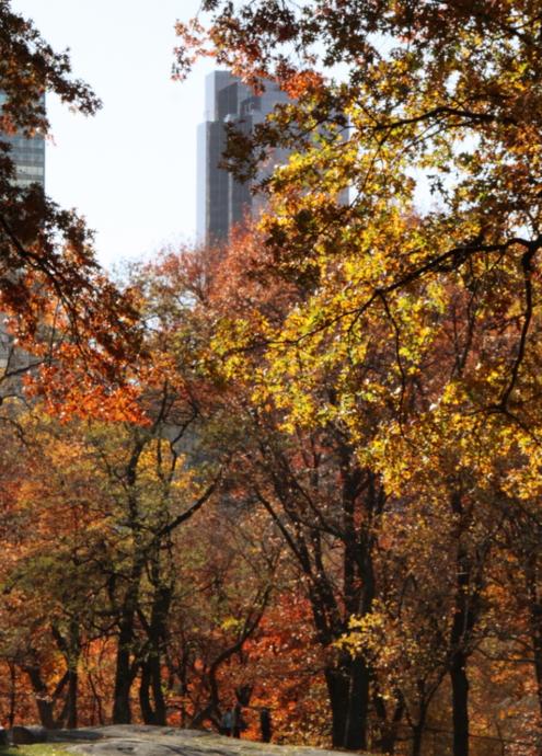 セントラルパーク紅葉お散歩コース (2) Mallまで北上_b0007805_1427111.jpg