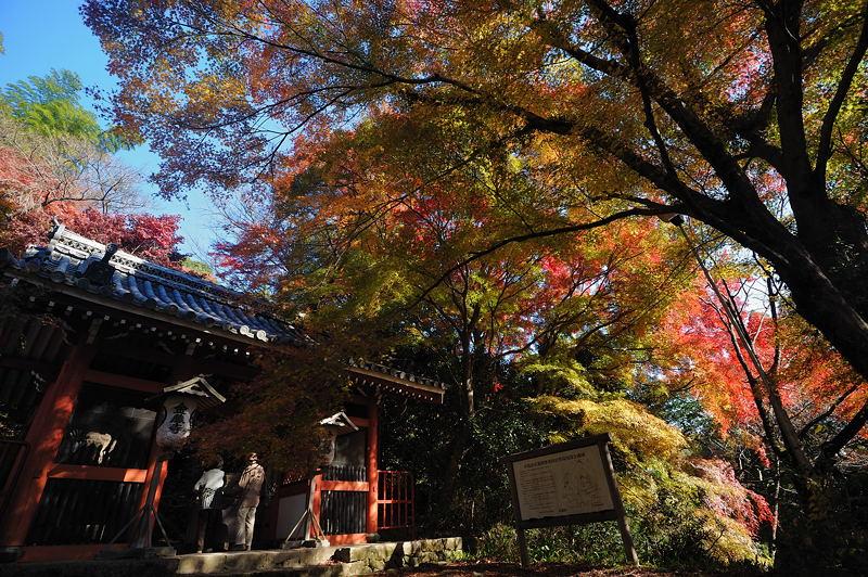 2010京都の紅葉 金蔵寺_f0032011_17131142.jpg