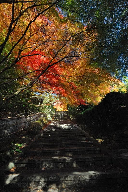 2010京都の紅葉 金蔵寺_f0032011_17133710.jpg
