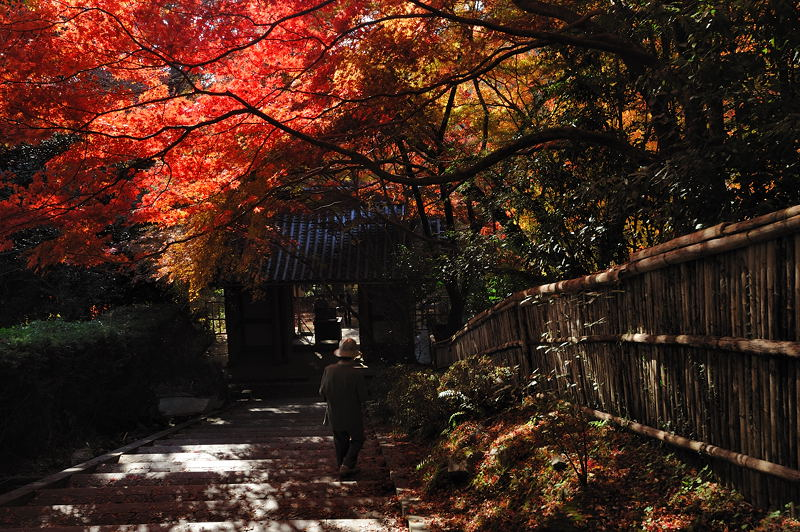 2010京都の紅葉 金蔵寺_f0032011_171417100.jpg