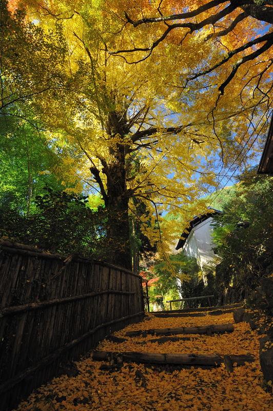 2010京都の紅葉 金蔵寺_f0032011_17142655.jpg