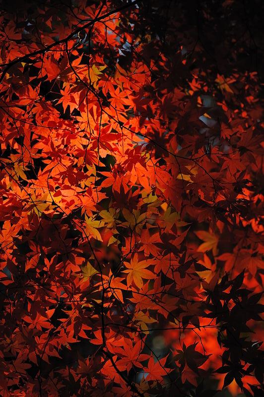 2010京都の紅葉 金蔵寺_f0032011_17353693.jpg