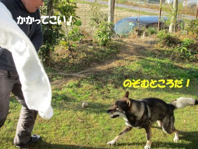 f0143123_20105522.jpg