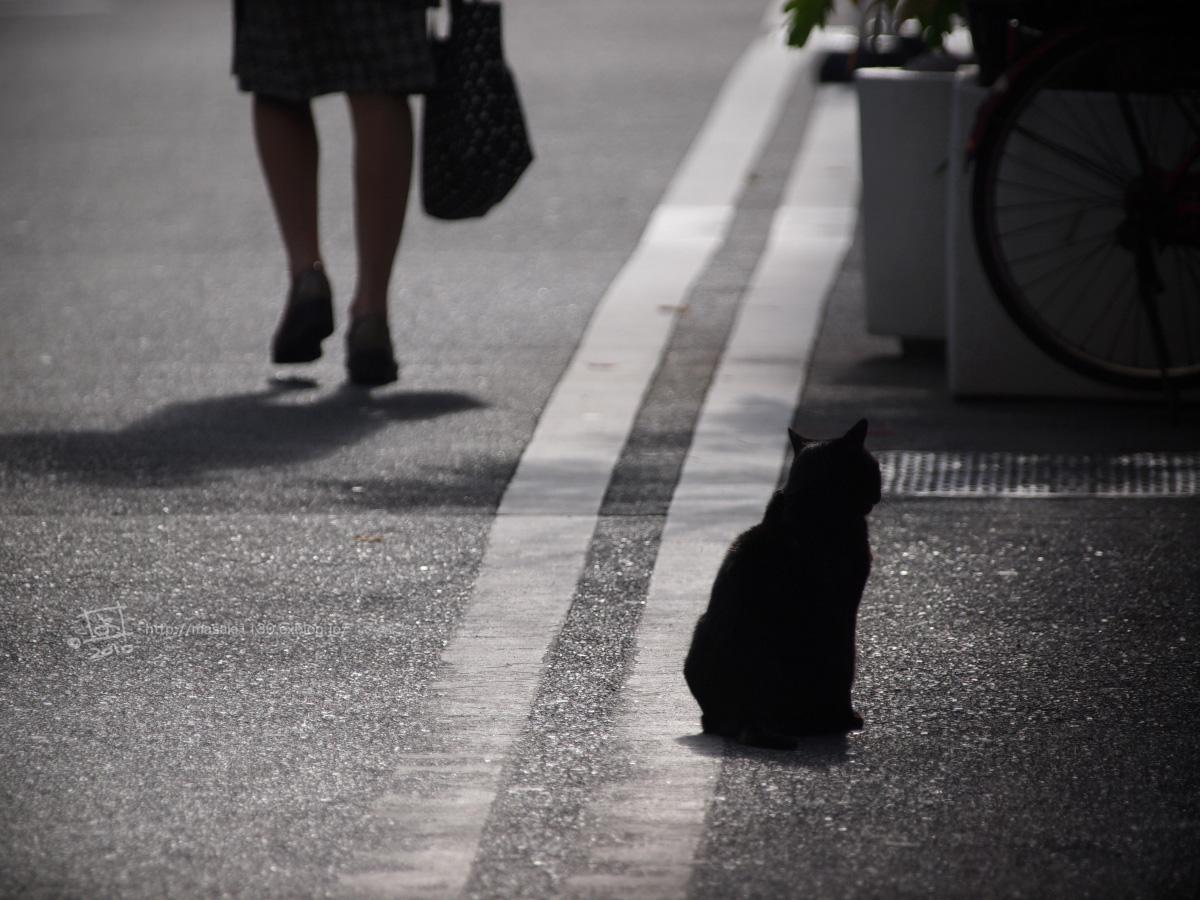 本日の猫・・・(笑_e0096928_0462731.jpg