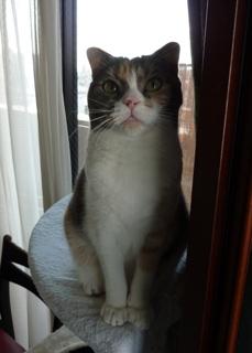 猫のお友だち マミちゃん編。_a0143140_18151535.jpg