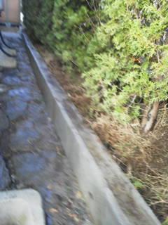肥料と土づくりと芝張り_c0186441_221021.jpg