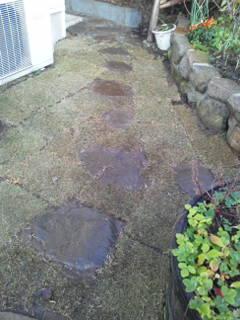 肥料と土づくりと芝張り_c0186441_2210217.jpg