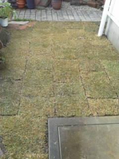 肥料と土づくりと芝張り_c0186441_2210250.jpg