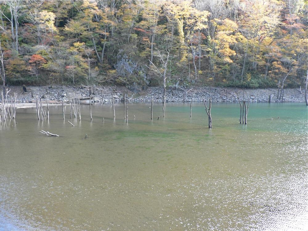 湖畔の山ブドウ_d0001843_1824975.jpg