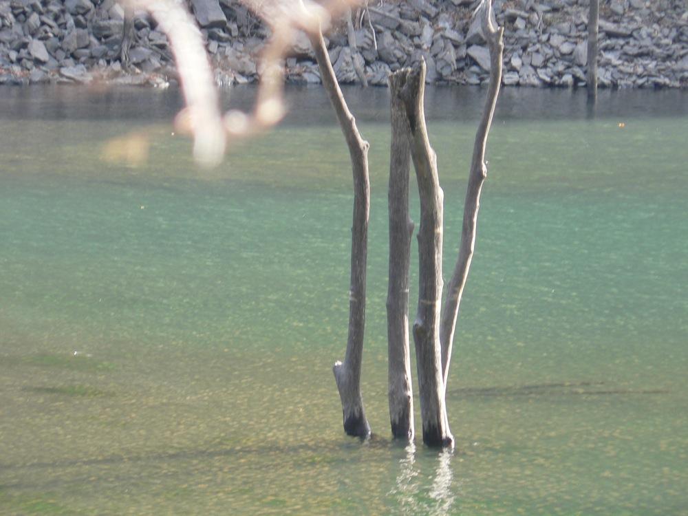 湖畔の山ブドウ_d0001843_1825724.jpg