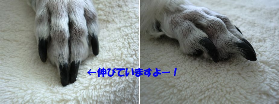 b0206444_19441366.jpg