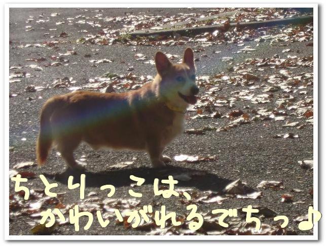 f0184055_11304658.jpg