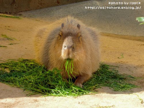 王子動物園をお散歩_b0024758_23334823.jpg