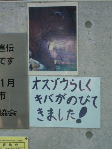 王子動物園をお散歩_b0024758_23372515.jpg