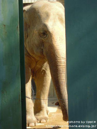 王子動物園をお散歩_b0024758_23375529.jpg