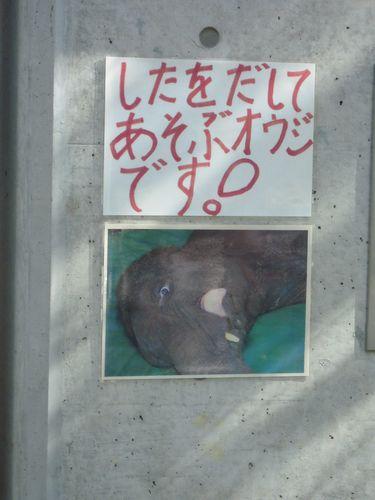 王子動物園をお散歩_b0024758_2337732.jpg
