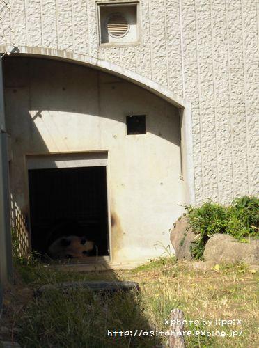 王子動物園をお散歩_b0024758_23394459.jpg