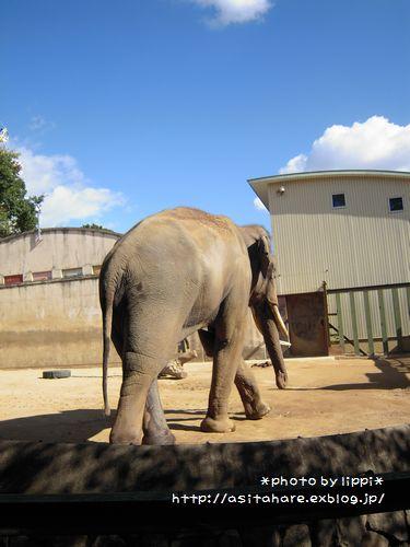 王子動物園をお散歩_b0024758_2339457.jpg