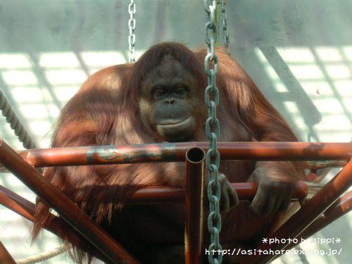 王子動物園をお散歩_b0024758_23414539.jpg