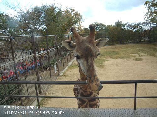 王子動物園をお散歩_b0024758_2342515.jpg
