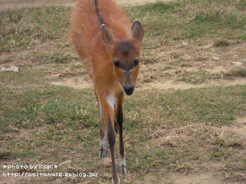 王子動物園をお散歩_b0024758_23432337.jpg