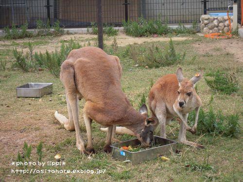 王子動物園をお散歩_b0024758_2351371.jpg