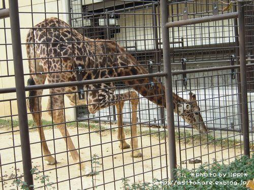 王子動物園をお散歩_b0024758_23514642.jpg