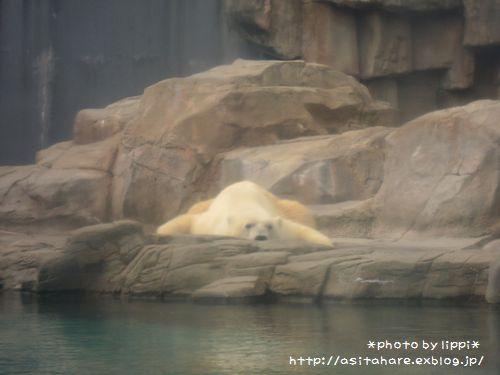 王子動物園をお散歩_b0024758_23525184.jpg