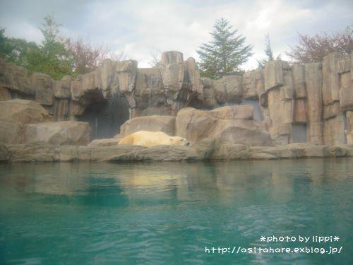 王子動物園をお散歩_b0024758_23535261.jpg