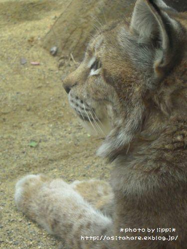 王子動物園をお散歩_b0024758_23544417.jpg