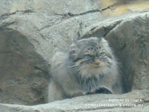 王子動物園をお散歩_b0024758_23545520.jpg